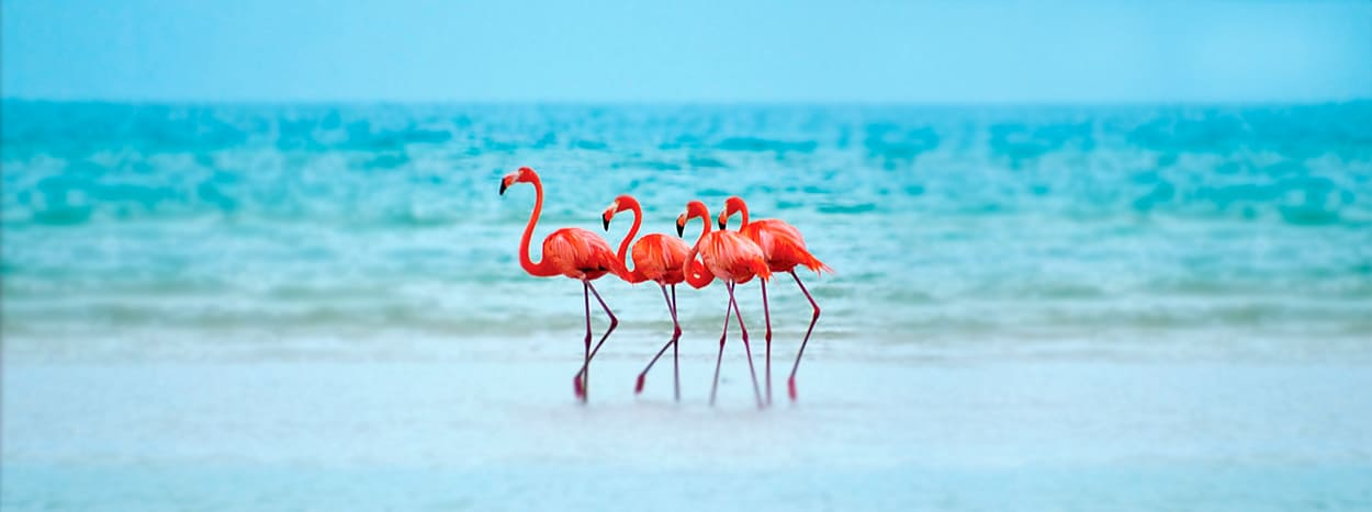 https://www.karmatrails.com/web/uploads/2020/04/Flamingos-rosados-holbox.jpg